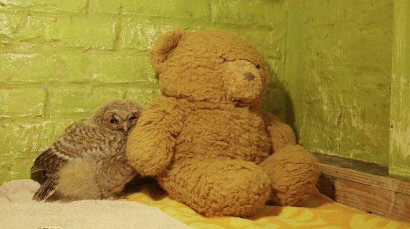 Uil met teddybeer